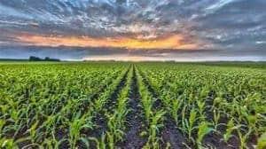 Multi-Peril Crop Insurance